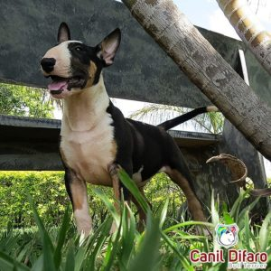 02-filhote-bull-terrier-monster-difaro