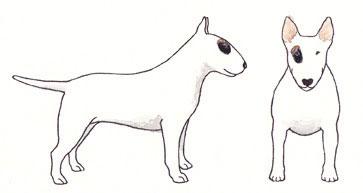 Bull Terrier Branco e Preto com Tigrado