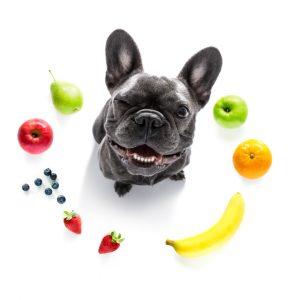 Frutas Que Cachorro Pode Comer Destak