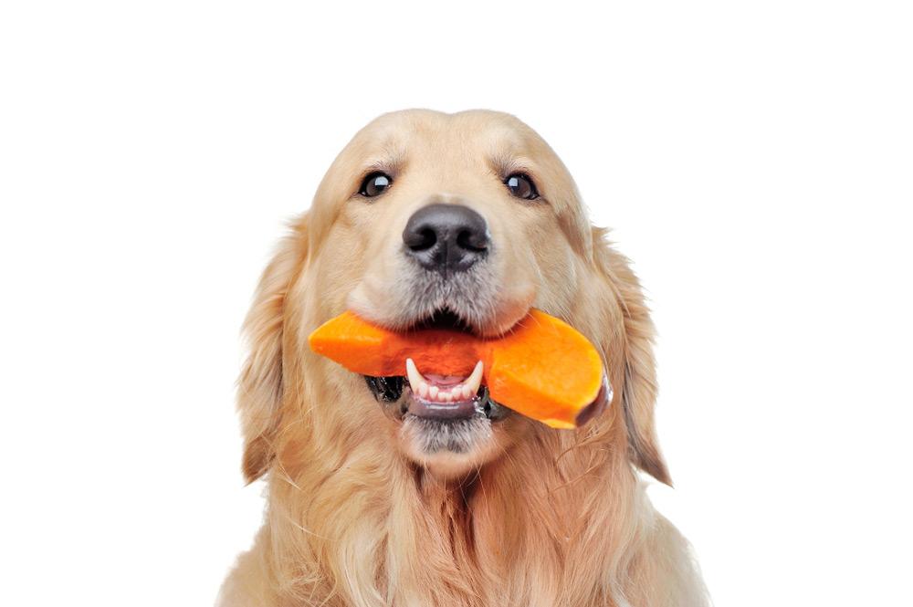 Pode Dar Abóbora Para Cachorro?