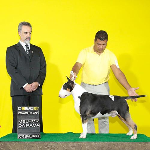 Bull Terrier Macho Jack 02