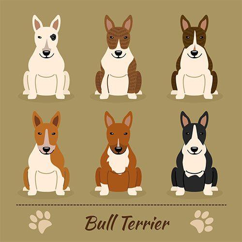 Bull Terrier Cores