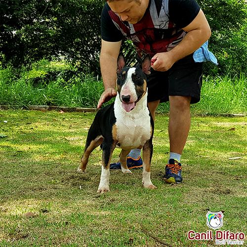 Bull Terrier Macho Monster Difaro 03