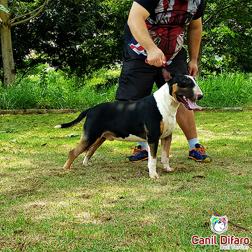 Bull Terrier Macho Monster Difaro 04